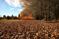 Todd Park in Autumn