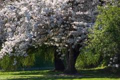 Spring in Geraldine