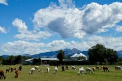 Rural Geraldine