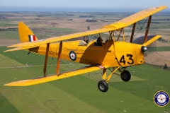 Lily the Tiger Moth