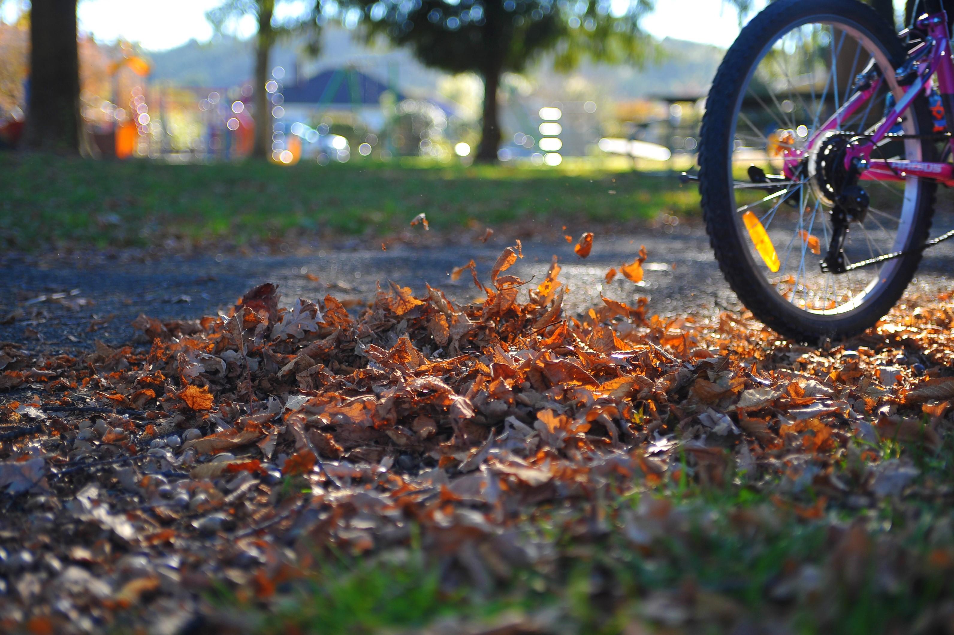 Biking in Geraldine