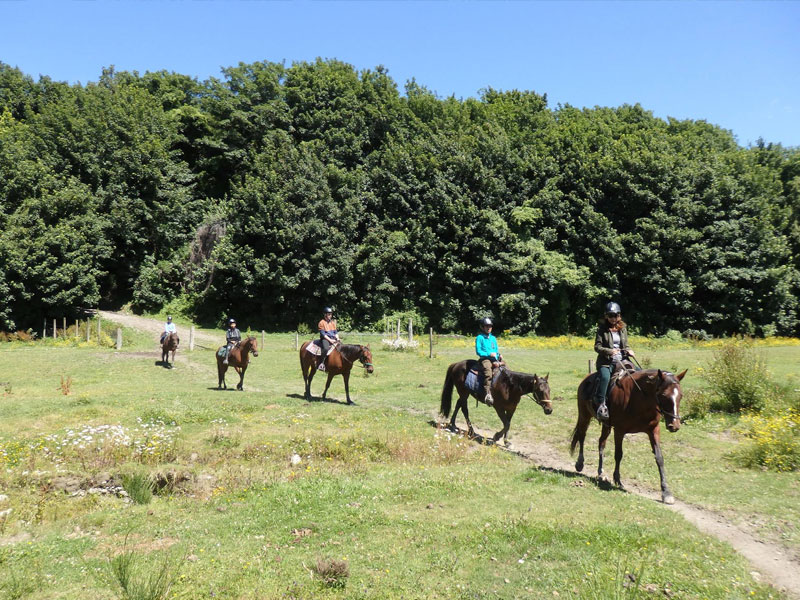 peel-forest-horse-trekking